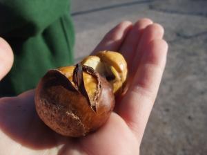Missouri Chestnuts