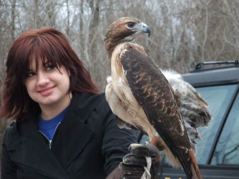 volunteer with a red-tailed hawk