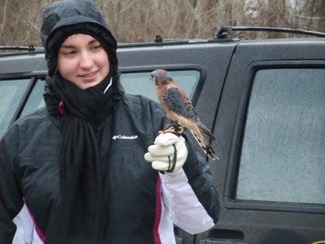 volunteer with an American Kestrel
