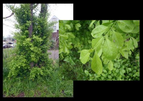 vine near cch