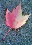 Kelly stopped at the side of the road to photograph this leaf. Photo by Kelly Gehringer.
